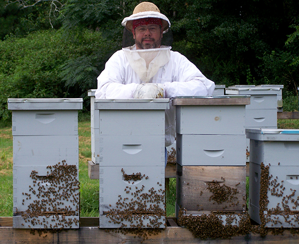 What do you do with a weak bee hives?