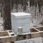 How to keep your bees thriving in January & February