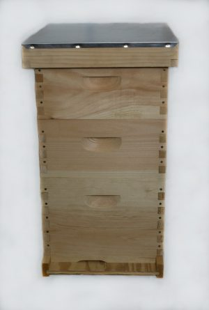 First Year 8 Frame Hive
